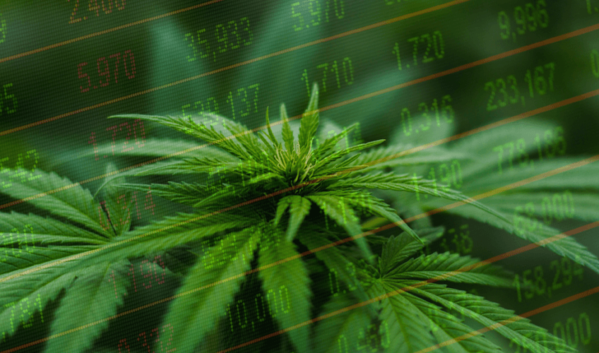 Best Marijuana Stocks to Buy in 2018